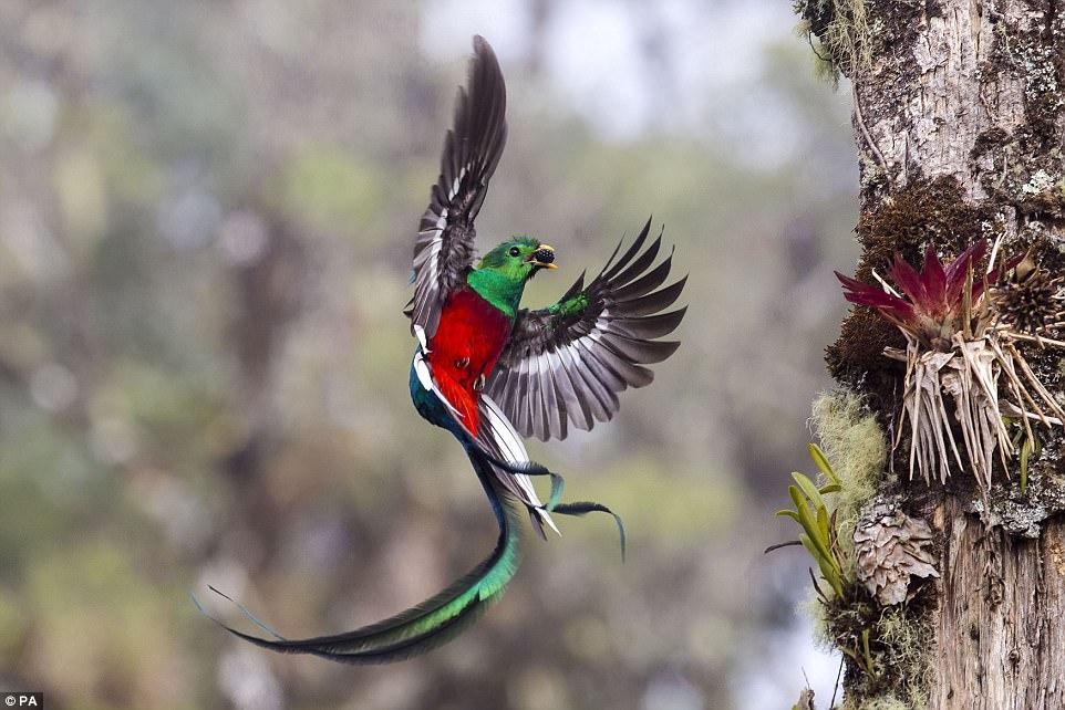 perierga.gr - Επιλέχθηκαν οι φιναλίστ για τον Φωτογράφο Άγριας Ζωής 2018