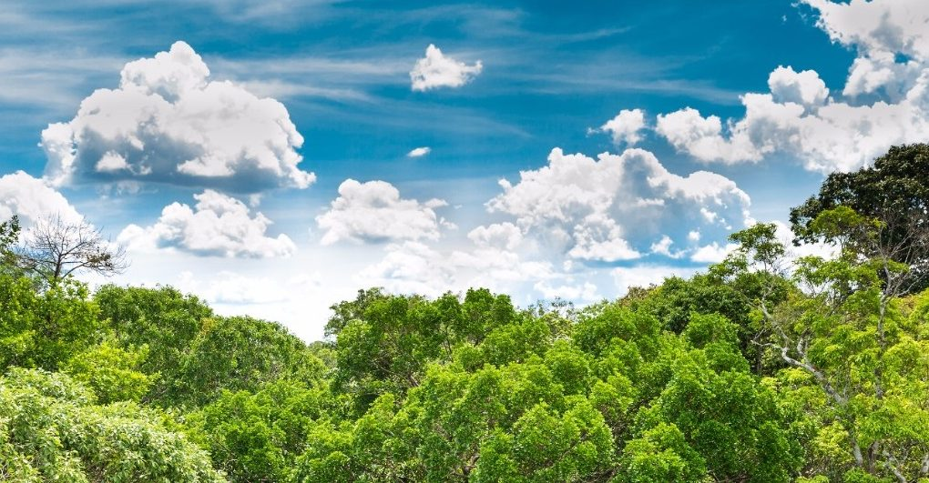 perierga.gr - 73 εκ. δέντρα στον Αμαζόνιο - Η μεγαλύτερη αναδάσωση που έγινε ποτέ!