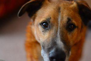 Τα σκυλιά μυρίζουν τη... συναισθηματική μας κατάσταση!