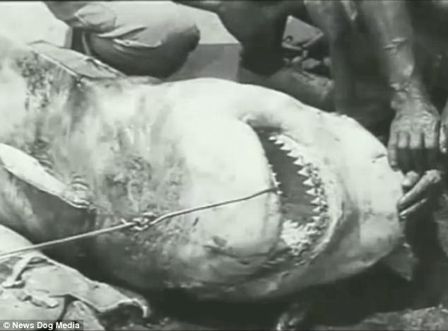 perierga.gr - Το πρώτο υποβρύχιο βίντεο από το 1914!