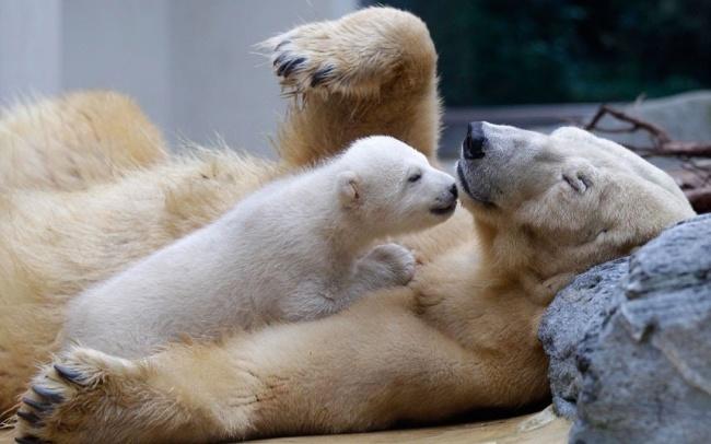 perierga.gr - Άγρια ζώα στην... παιδική τους ηλικία!