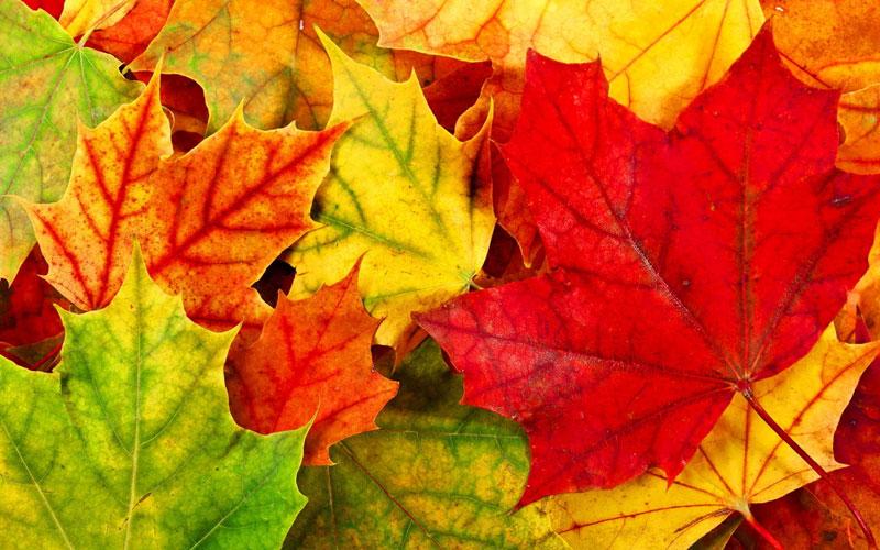 Perierga.gr - Γιατί τα φύλλα το φθινόπωρο αποκτούν διαφορετικά χρώματα