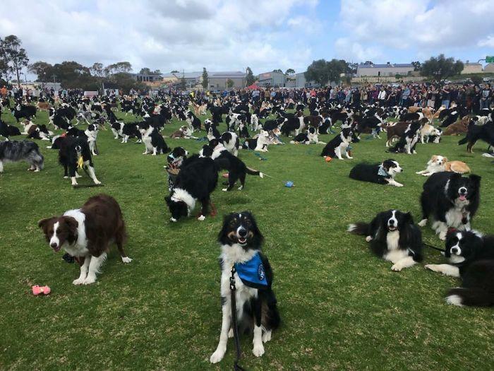 perierga.gr - 576 ολόιδια σκυλιά συγκεντρώθηκαν στο ίδιο σημείο!