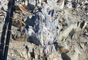 Βρέθηκε απολιθωμένο δάσος στην Ανταρκτική