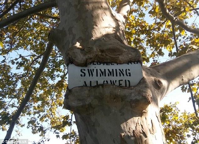 perierga.gr - Δέντρα μεγαλώνουν γύρω από παράξενα αντικείμενα!