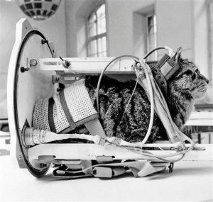 Φελισέτ: Η μοναδική γάτα που ταξίδεψε στο διάστημα