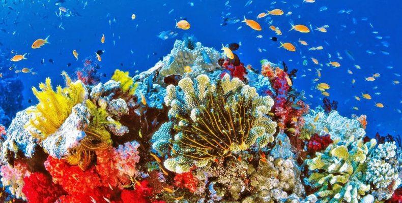 Σε τροπική θάλασσα μετατράπηκε η Ανατολική Μεσόγειος!