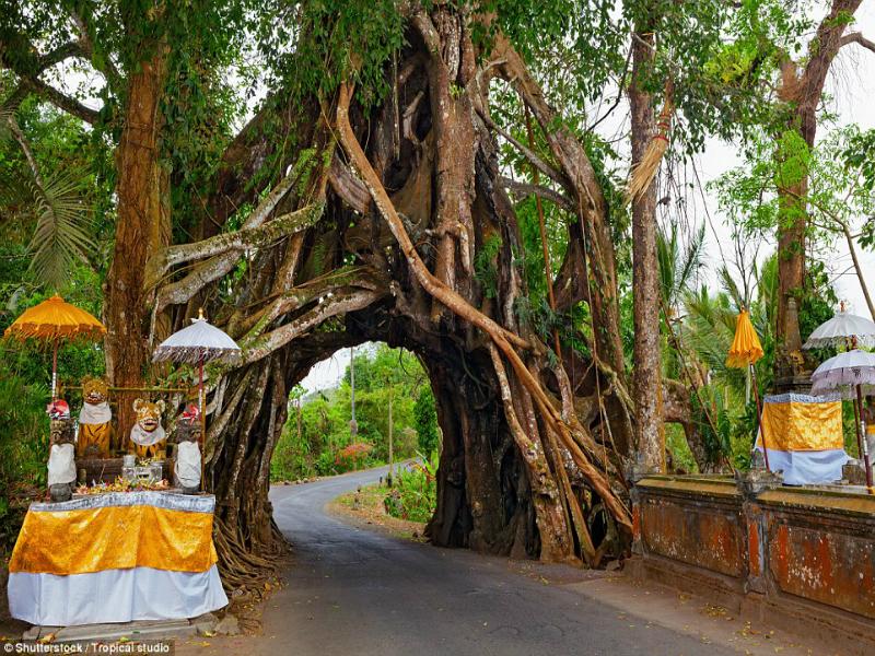 Perierga.gr-Τα εντυπωσιακότερα δέντρα του κόσμου