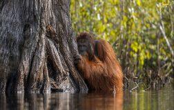 Perierga.gr-Οι νικήτριες φωτογραφίες της φύσης στο διαγωνισμό του National Geographic