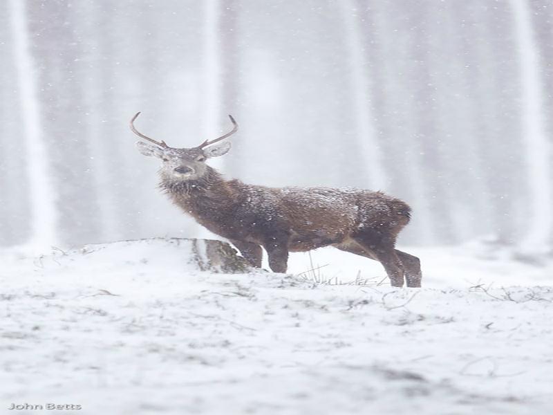Perierga.gr - Φωτογραφίες με ελάφια που απολαμβάνουν το χιόνι