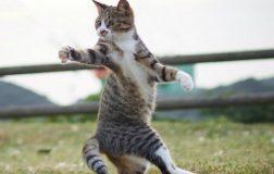 Perierga.gr-Γάτες...νίντζα!