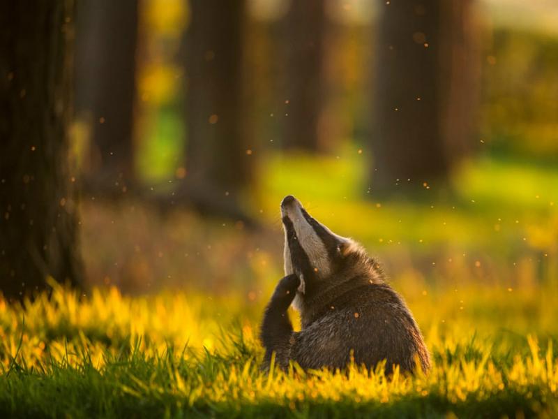 Perierga.gr - Οι καλύτερες φωτογραφίες άγριας ζωής για το 2017
