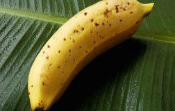 Perierga.gr - Έρχονται οι μπανάνες που θα μπορούμε να τρώμε με τη φλούδα