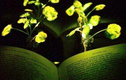 Perierga.gr - Φυτά που λάμπουν θα φωτίζουν το χώρο μας;