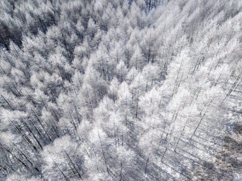 Perierga.gr - Παραμυθένιες χειμερινές εικόνες της Ιαπωνίας