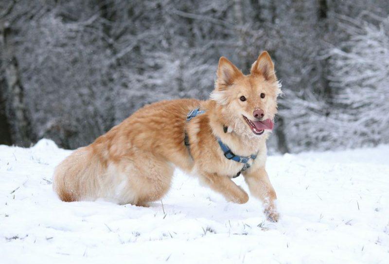 Perierga.gr - Σκύλοι απολαμβάνουν παιχνίδια στο χιόνι