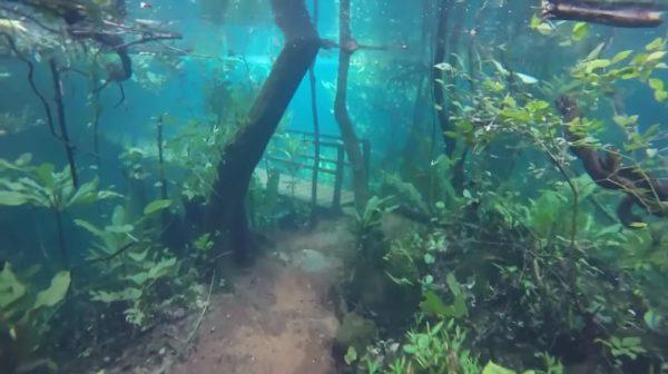 Ένα τροπικό δάσος βυθισμένο κάτω από το νερό