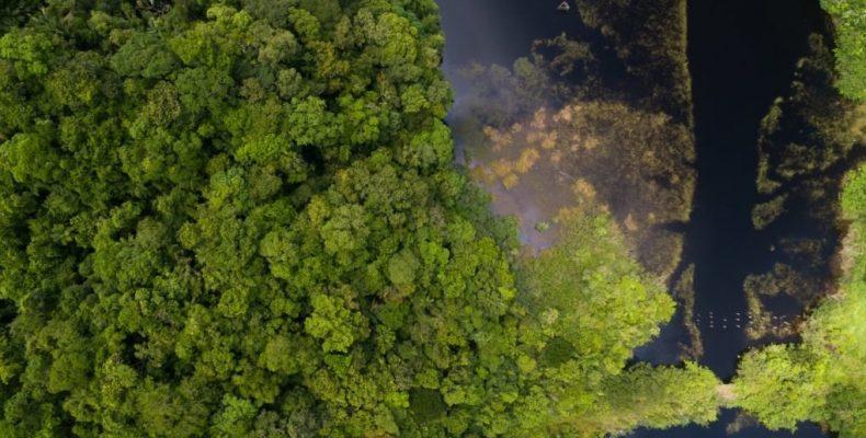 Perierga.gr - Το τελευταίο, ανέγγιχτο δάσος του πλανήτη