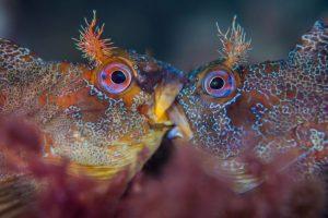 Perierga.gr - Οι κορυφαίες υποβρύχιες φωτογραφίες για το 2018
