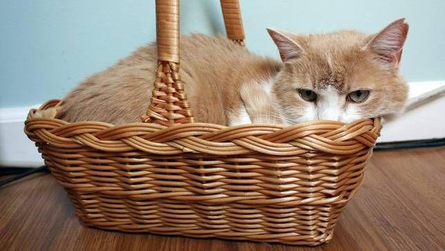 Perierga.gr - Γάτες βολεύονται στα πιο απίστευτα σημεία!