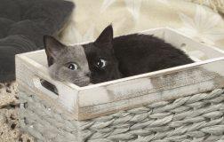 Perierga.gr - Ένα γατάκι... με δυο πρόσωπα