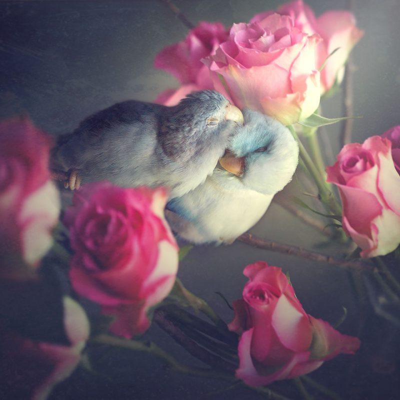 Perierga.gr - Πουλιά ποζάρουν με... χάρη στο φακό!