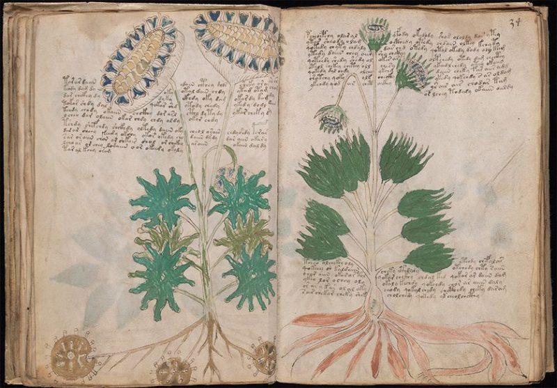 Perierga.gr - Ένα βιβλίο 600 χρόνων που κανείς δεν μπορεί να διαβάσει!