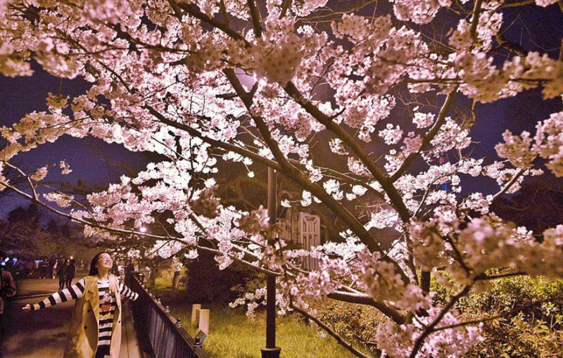 Perierga.gr - Η άνοιξη ήρθε στην Ιαπωνία!