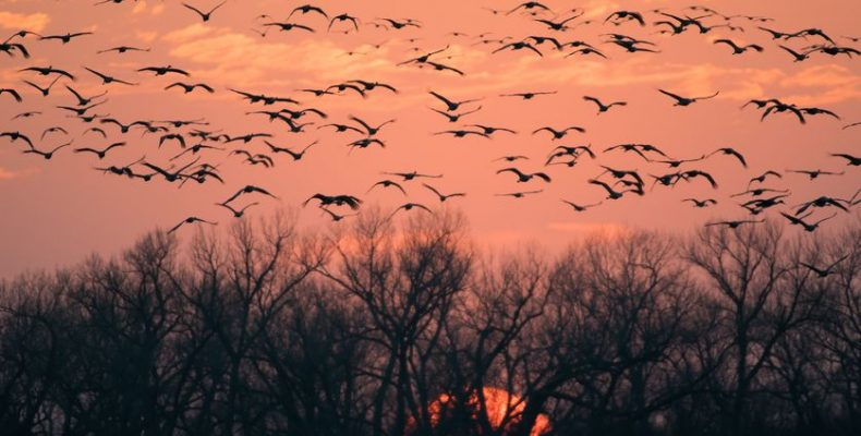 Perierga.gr - Εικόνες από την πιο εντυπωσιακή μετανάστευση πουλιών