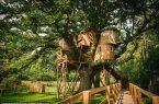 Perierga.gr - Ένα διώροφο δεντρόσπιτο χτισμένο σε μια βελανιδιά 250 χρονών