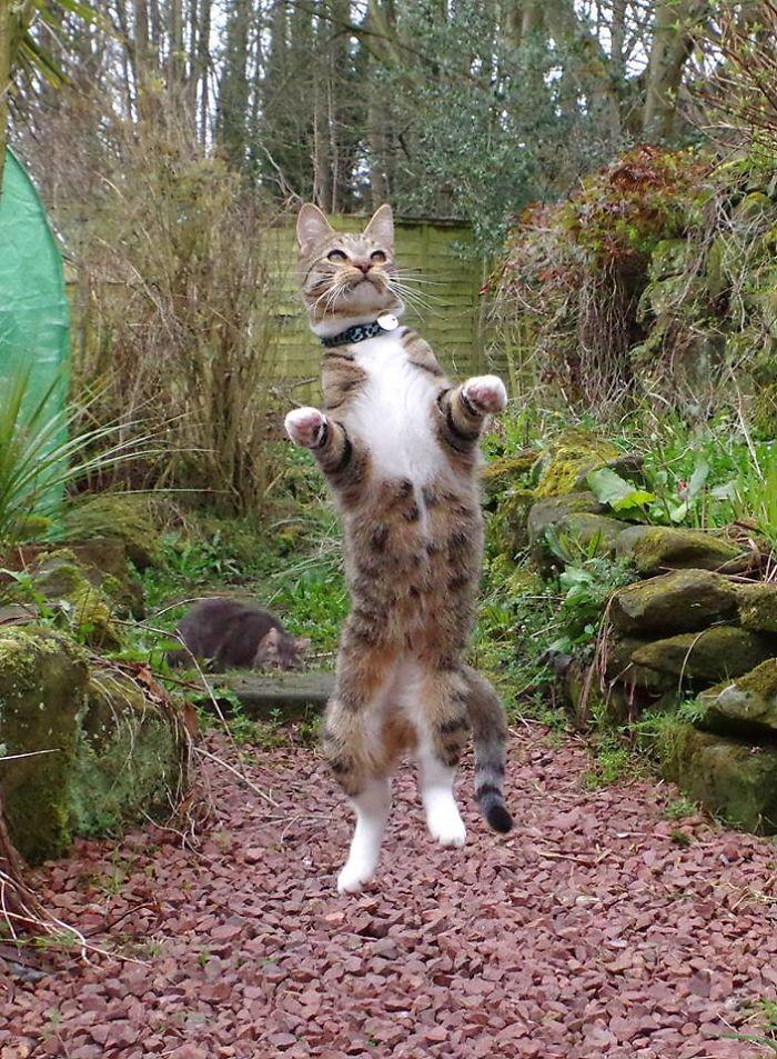 Perierga.gr - Γάτες... που χορεύουν!