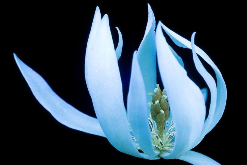 Perierga.gr - Φωτογραφίες με λουλούδια που μοιάζουν φανταστικά
