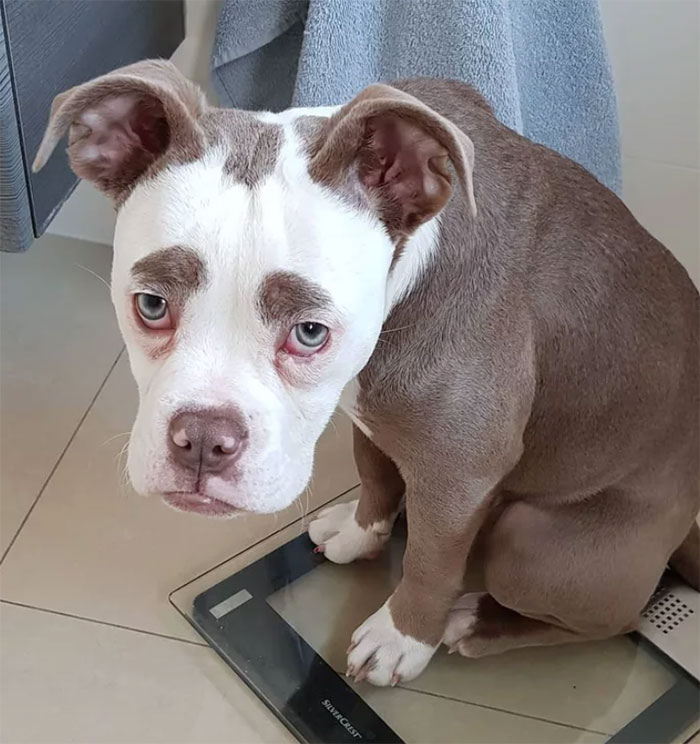 Perierga.gr - Το πιο... λυπημένο σκυλί του κόσμου!