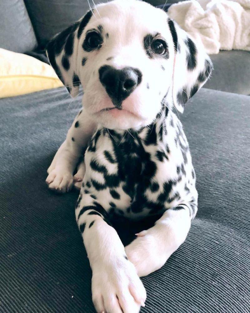 Perierga.gr - Αυτός ο σκύλος είναι αξιολάτρευτος και ο λόγος είναι προφανής