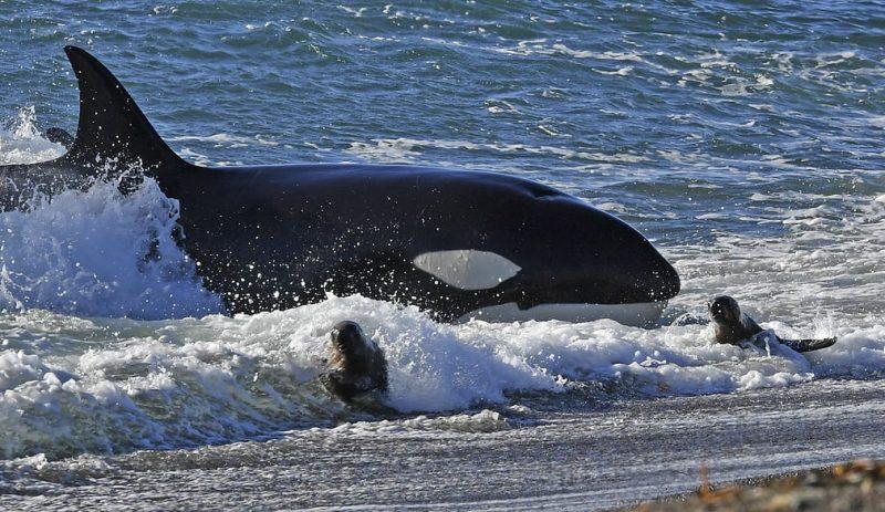 Perierga.gr - Η άγρια ζωή του πλανήτη σε μερικά κλικ