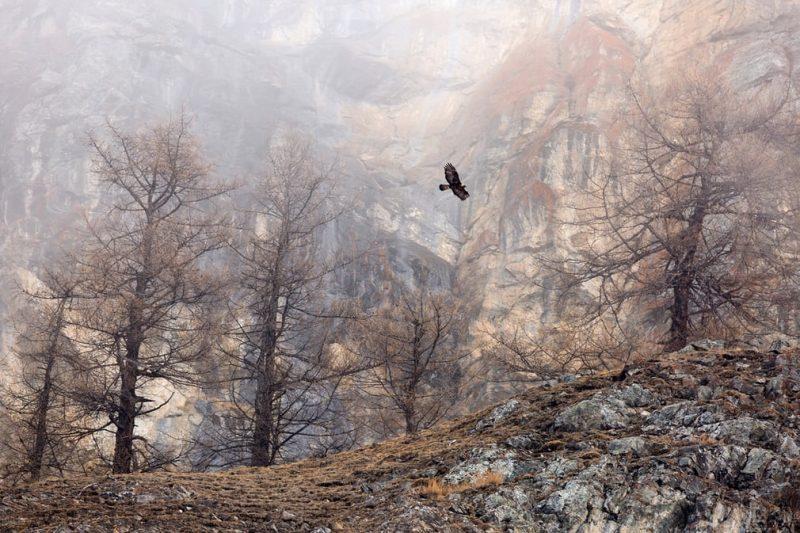 Perierga.gr - Νικήτριες φωτογραφίες της φύσης στο διαγωνισμό φωτογραφίας GTD