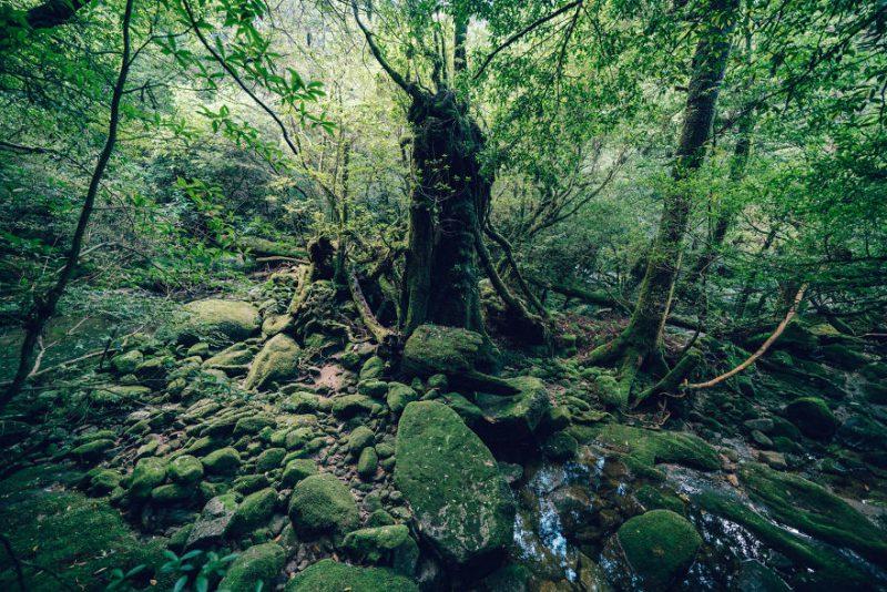 Perierga.gr - Το αρχαίο κεδρόδασος της Ιαπωνίας μοιάζει βγαλμένο από παραμύθι