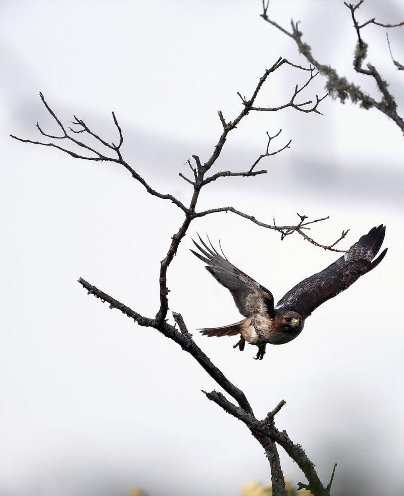 Perierga.gr - Η ομορφιά των ζώων του πλανήτη σε μερικά κλικ