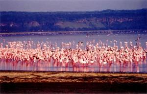 Μια λίμνη χρώματος ροζ!