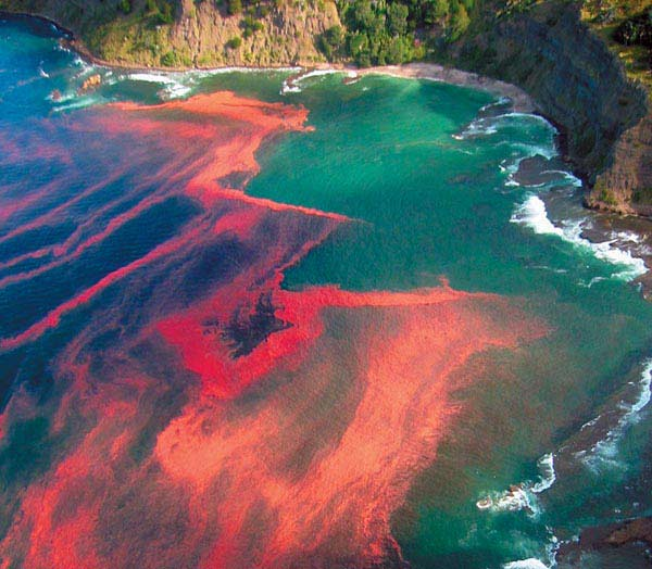 Κόκκινη παλλίροια