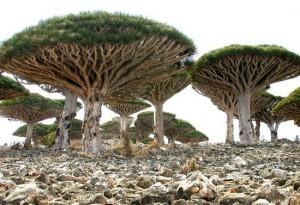 Το νησί Σοκότρα: Εξωγήινο τοπίο στη Γη!