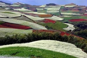 Πανδαισία χρωμάτων στους αγρούς της Κίνας!