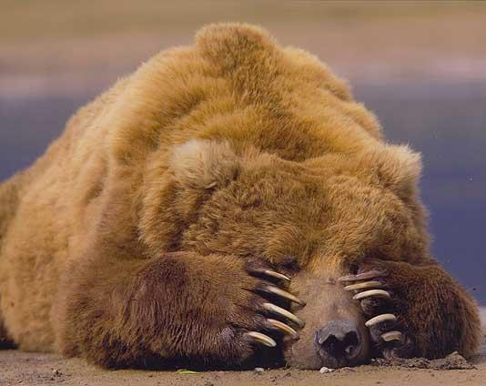 αρκούδα που χρονολογείται online dating όταν πρέπει να αρχίσετε να στέλνετε μηνύματα