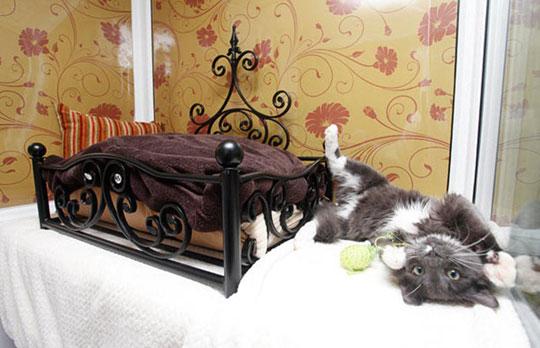 perierga.gr - Ξενοδοχείο για γάτες