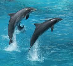 """Perierga.gr - Ετοιμος ο """"μεταφραστής"""" δελφινιών"""