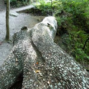 Τα περίεργα δέντρα με τα... νομίσματα