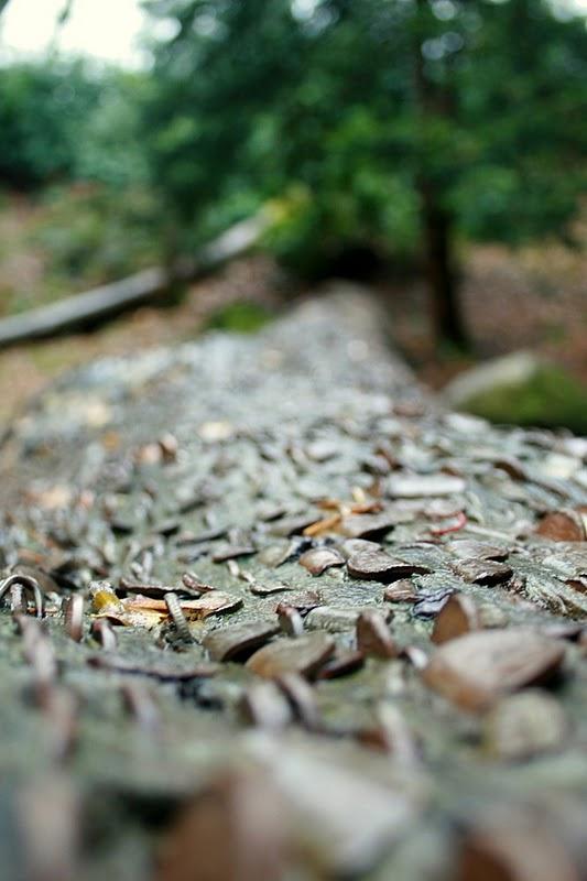 Perierga.gr - Δέντρα με νομίσματα
