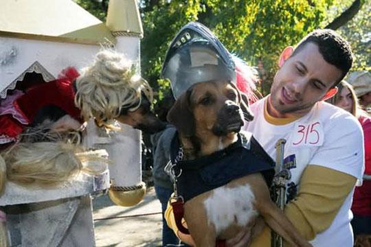 Perierga.gr - Η παρέλαση των σκυλιών