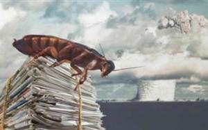 Οι κατσαρίδες μπορούν να επιβιώσουν μιας πυρηνικής καταστροφής;