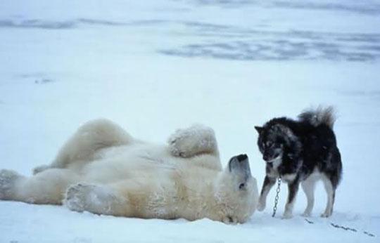 Perierga.gr - Ασυνήθιστες φιλίες μεταξύ ζώων